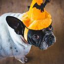 halloween/ThinkstockPhotos-542071206